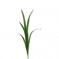 Feuilles d'Orchidée Cymbidium 74cm - Vert