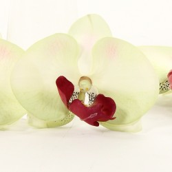 Fleurons d'Orchidée en sachet de 24 - Vert