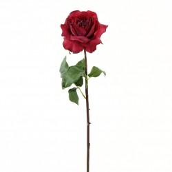 Rose Duchesse ouverte tige courte 51cm - Rouge Fushia