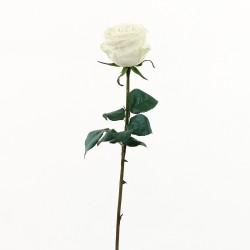 Rose Equatoriale 52cm - Blanc