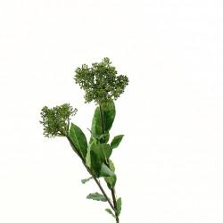 Skimmia 74cm - Vert