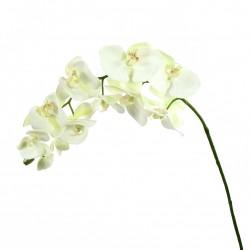 Orchidée Phalaenopsis 99cm - Blanc vert